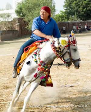 indiahorse2